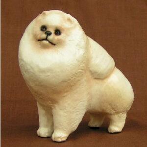 Pomeranian, Cream