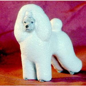 Poodle, White